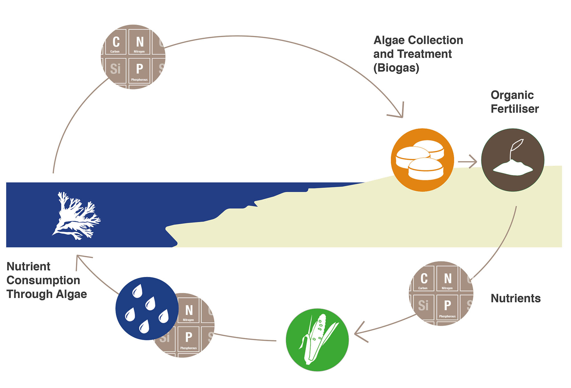 The image shows the concept of nutrient recycling through the use of algae.