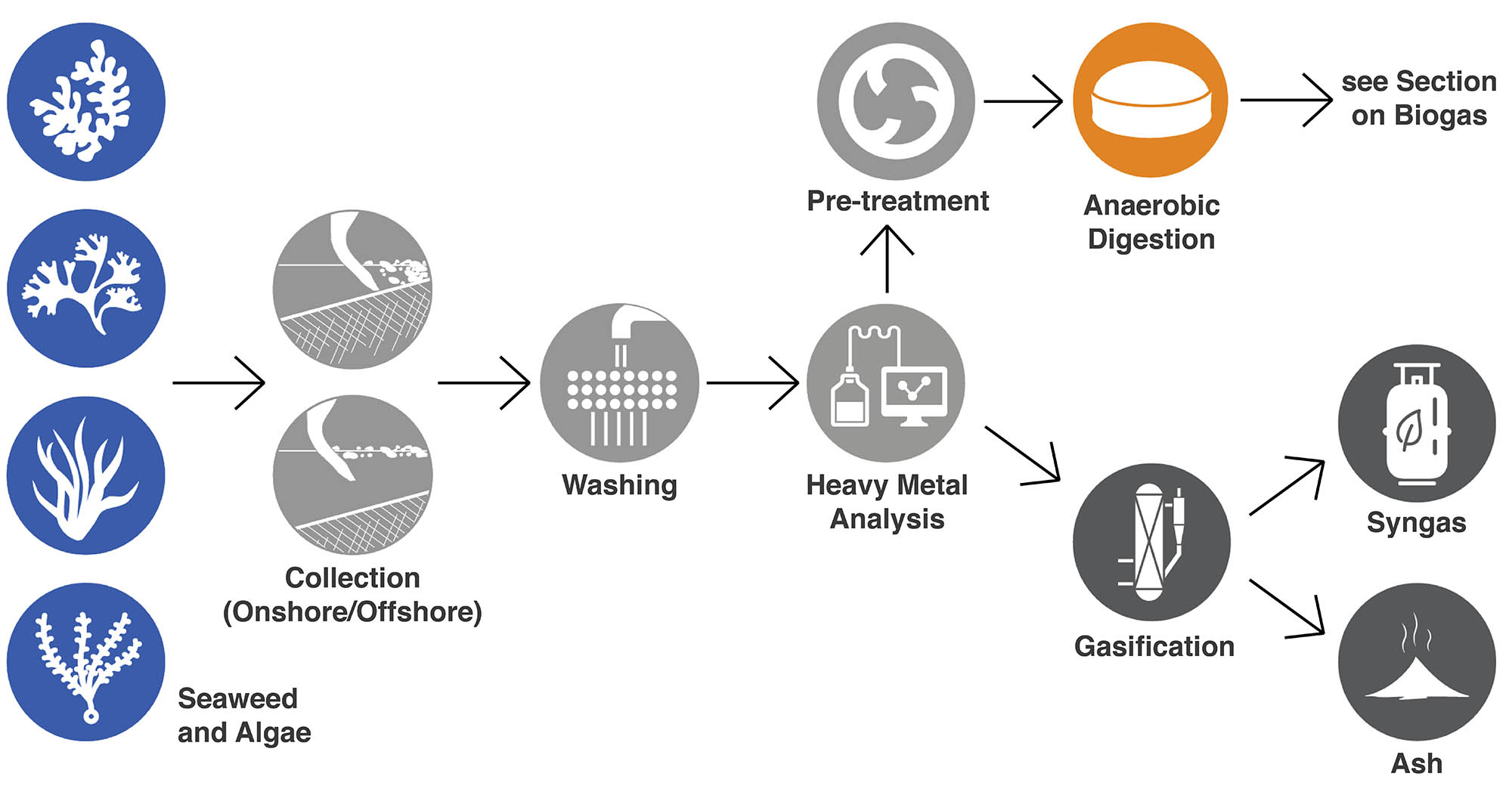 The image shows the process of collecting, cleaning and utilising seaweed for energy.
