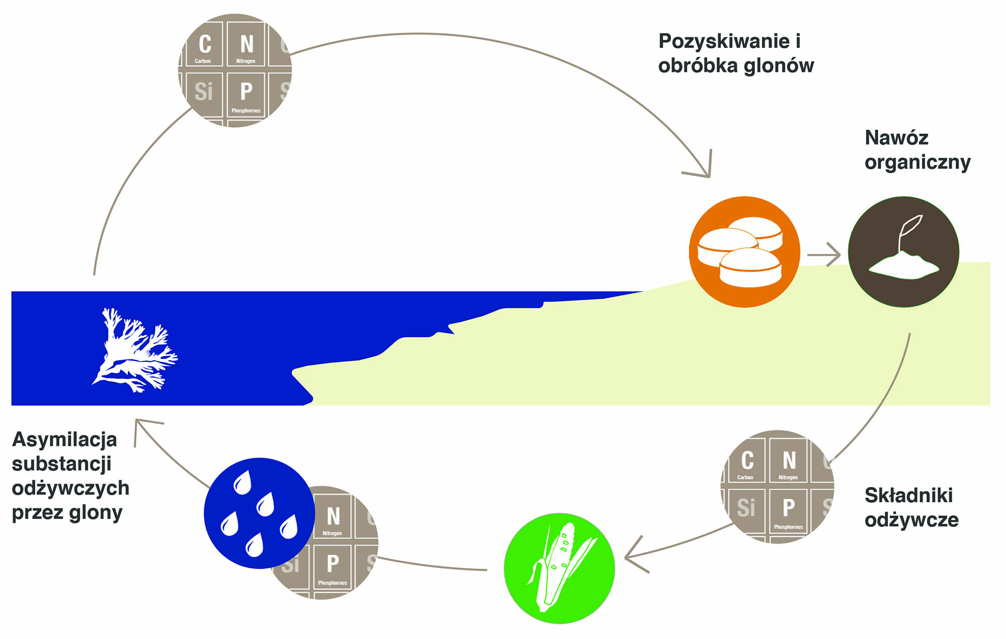 Coastal nutrient cycle