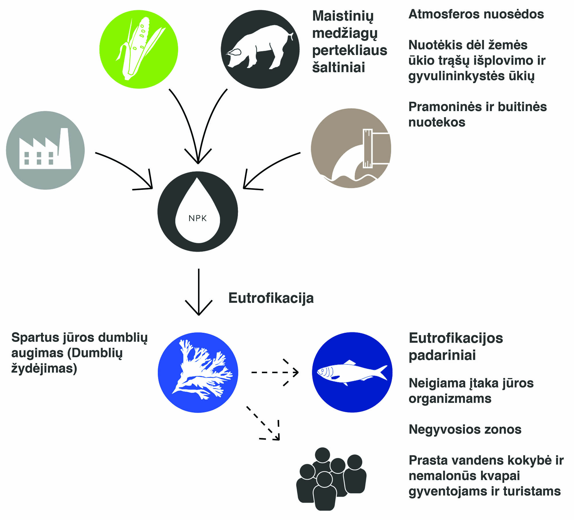 Eutrophication Causes and Effects